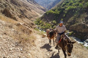 Colca Canyon - Local transport in the world's second deepest canyon