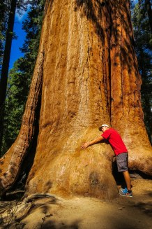 California - Just hugging a Giant Sequoia Tree. These trees are the biggest trees on the planet by volume. Not as tall as their redwood brothers but bigger in diameter.