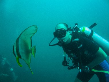 Thailand - A curious bat fish stayed with us at the safety stop at five meters.