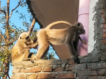 After this monkey stole the cheese cake from my plate it got its bum picked.